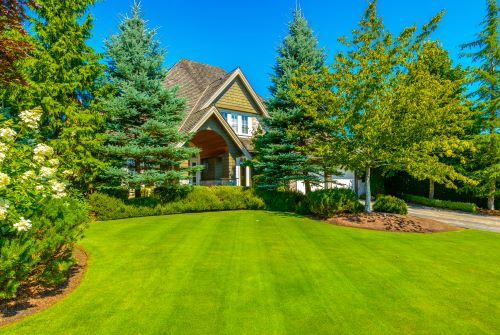 Should I Plant a Tree in Front of My House?