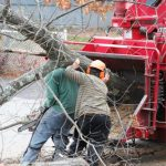 mr-tree-care-for-your-yard-steps-to-take-before-and-after-tree-removal