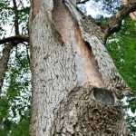mr-tree-which-tree-insects-should-you-watch-out-for-emerald-ash-borer