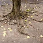 mr-tree-5-common-oregon-tree-problems-and-their-solutions