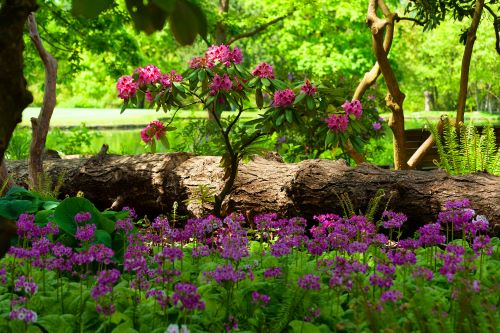 mr-tree-5-pacific-northwest-landscaping-ideas-to-give-your-yard-a-fresh-look-rhododendron