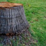 mr-tree-how-to-remove-a-palm-tree-stump-and-more