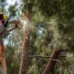 mr-tree-is-topping-trees-good-plus-5-other-tree-care-myths