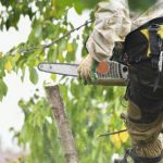 mr-tree-what-can-an-arborist-do-for-my-trees-in-vancouver-washington