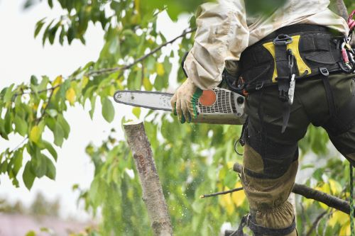 What Can an Arborist Do for My Trees in Vancouver, Washington