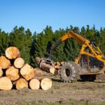 mr-tree-what-does-the-land-clearing-process-involve