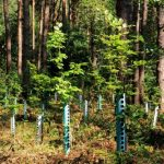 mr-tree-what-makes-trees-grow-faster