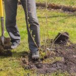 mr-tree-whats-the-best-time-to-plant-trees-in-oregon