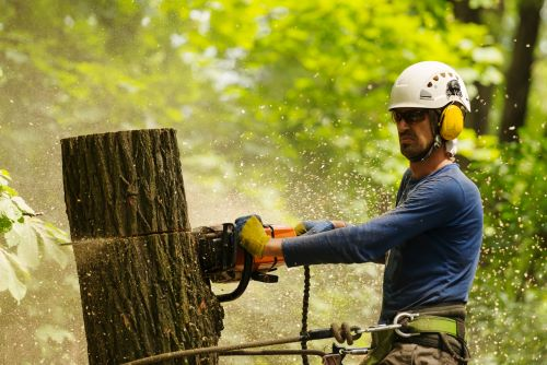 mr-tree-when-to-call-a-professional-for-cutting-down-a-tree