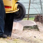 mr-tree-how-to-find-the-best-tree-stump-removal-near-you