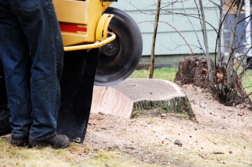 How to Find the Best Tree Stump Removal Near You