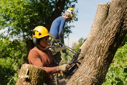 mr-tree-what-will-general-tree-service-in-portland-or-include