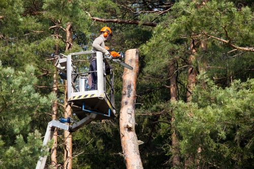 What Are the Steps of Cutting Down a Tree in Sections?