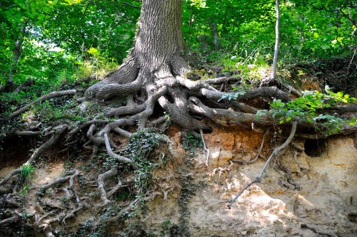mr-tree-why-are-tree-roots-so-important