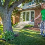 Mulch is also pleasing to the eye, so it adds a landscaped look to your yard with the added benefit of protecting soil health for your trees in summer.
