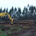 mr-tree-what-do-logging-companies-in-oregon-need-to-know