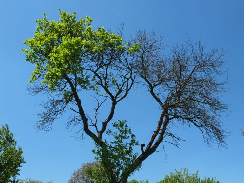5 Signs a Tree Is Dying