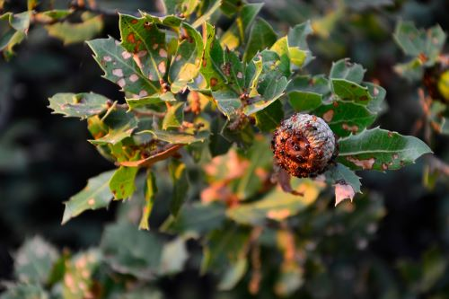 mr-tree-identify-and-get-rid-of-oak-ant-infestation