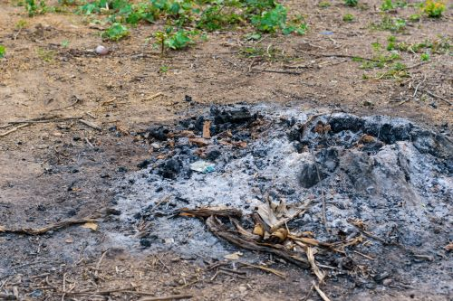 What Are the Rules About Burning Tree Stumps?