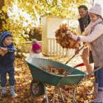 mr-tree-5-tips-for-an-easier-fall-when-trees-shed-leaves