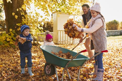 5 Tips for an Easier Fall: When Trees Shed Leaves