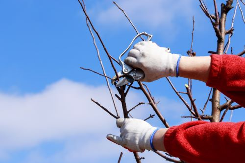 Is Fall When It's Best to Prune Trees?