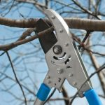 mr-tree-what-are-the-techniques-for-cutting-back-overgrown-trees