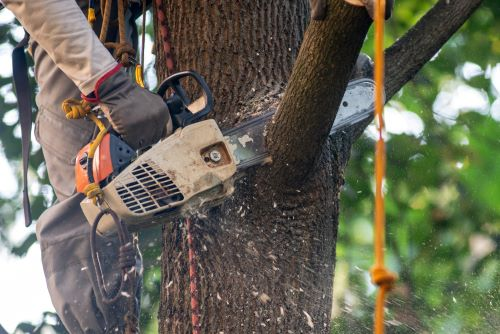 What Types of Tree Service Are Available in Salem Oregon?