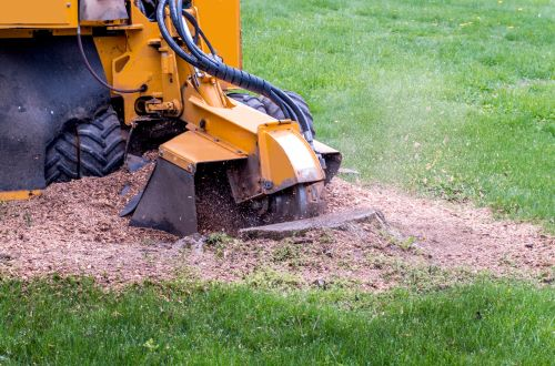 Yard Care Before and After Portland Stump Grinding Services