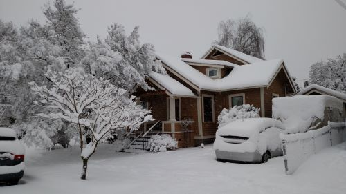 """9 Tree Idioms for When You're Feeling """"Out of Your Tree"""" This Winter"""