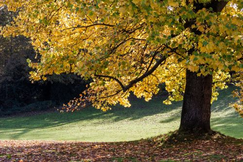 5 of the Best Hardwood Trees to Plant in Your Yard