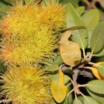 7-trees-that-provide-food-for-wildlife-golden-chinquapin