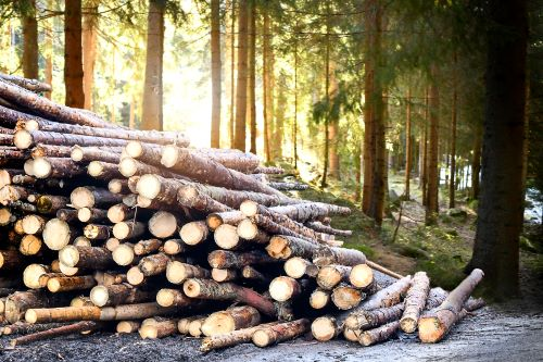 Logging Is More Than Cutting Down Trees
