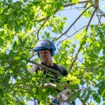 what-do-certified-arborists-study