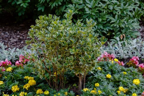 5 of the Best Bushes for in Front of Your House