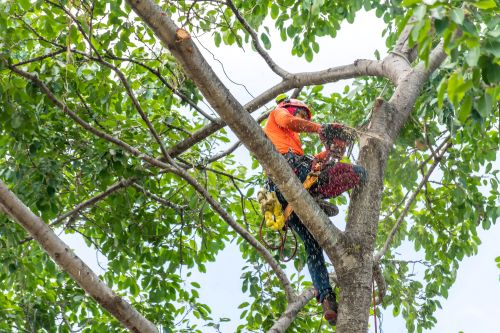 5 Reasons to Hire a Tree Cutting Company