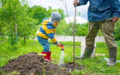 5 Tips for Caring for Your Still Growing Tree