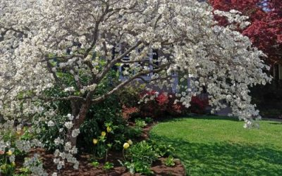 5 Trees to Plant in the Spring