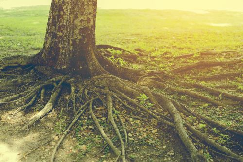 Give Your Tree a Strong Root System
