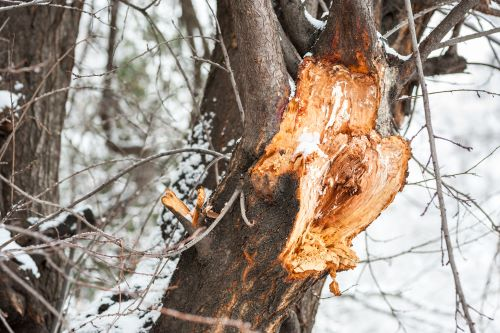Why and How to Inspect Your Trees for Storm Damage