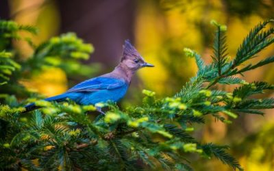 5 Birds You'll Commonly Find in Your Portland Oregon Trees