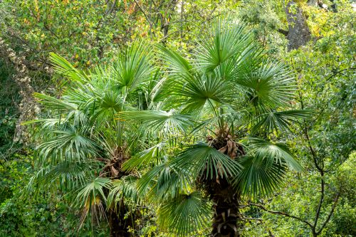 How To Care for Palm Trees in Oregon