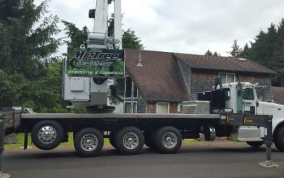 5 Tree Service Jobs Mr. Tree Can Help You With