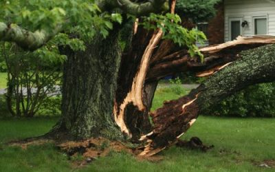 What To Do in Case of a Tree Emergency