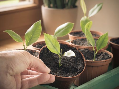 Can You Plant a Tree Branch and Grow a New Tree?
