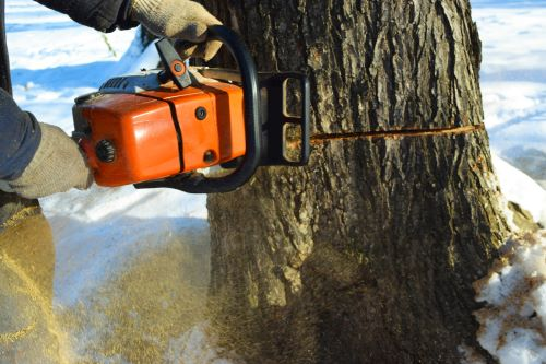 How to Safely Cut Down a Tree with a Chainsaw