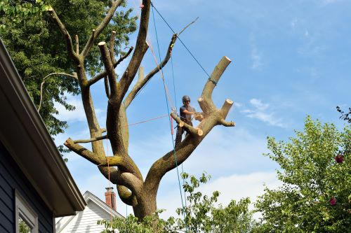 Find the Best Tree Removal Service in Clackamas