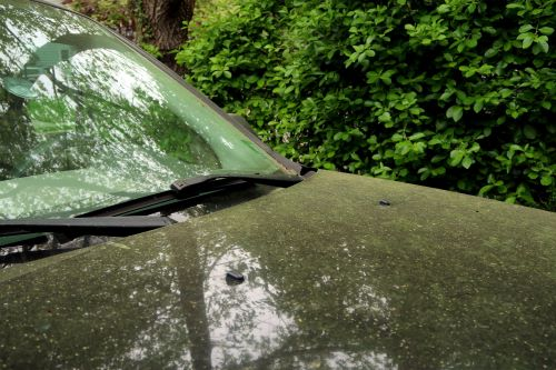 mr-tree-how-to-get-pollen-and-sap-off-your-car
