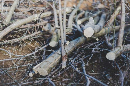 How To Remove Dead Tree Branches