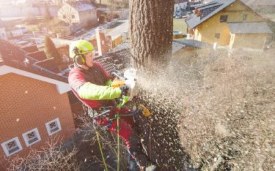 What Kind of Insurance Covers Tree Service?